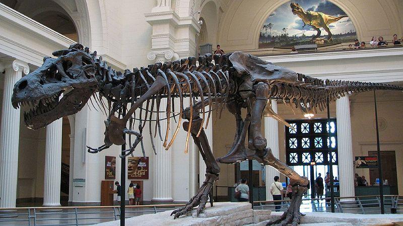 Skelet van de bekende Tyrannosaurus Rex 'Sue' - Foto: CC/Steve Richmond