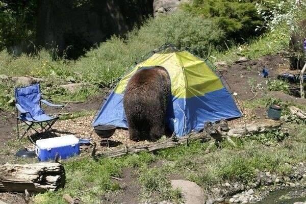 De situatie in Oekraïne op een massaal via Twitter verspreide foto: de Russische beer breekt in in een uiterst kwetsbaar Oekraïens (geel-blauw) tentje.
