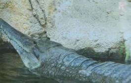 Krokodil Matata (StillYouTube)