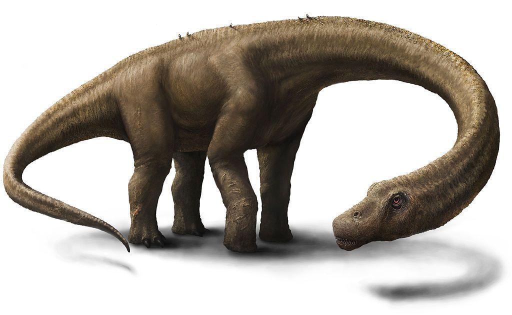 Artist-impression van de Dreadnoughtus (Jennifer Hall - wiki)