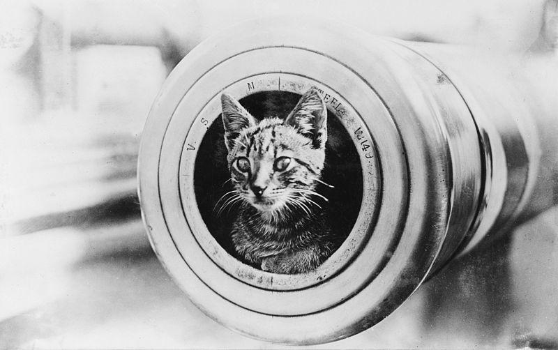Kattenkwaad & katzwijm - een historische minikatalogus