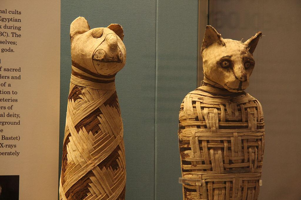 Egyptische dierenmummies in het British Museum - cc