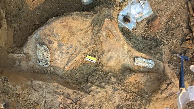 Naturalis vindt vijf triceratopsen (Naturalis)