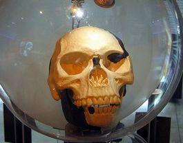 Replica van de schedel van de Piltdown-mens – Foto: CC
