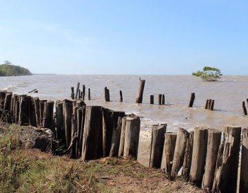 Suriname (cc - Pixabay - braico)