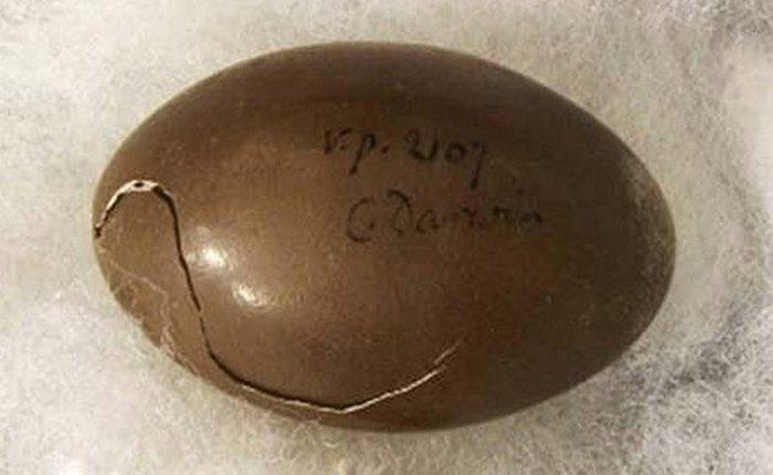 Het ei van Darwin - Afbeelding: Universiteit van Cambridge