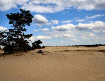 Zandverstuiving in Nationaal Park De Hoge Veluwe - cc
