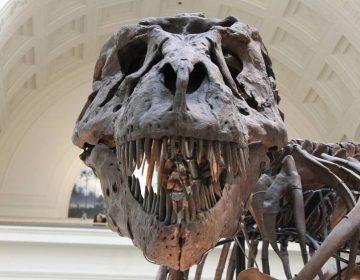 Tyrannosaurus Rex (cc - Pixabay)