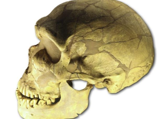 Schedel van een neanderthaler gevonden in La Ferrassie. (CC BY 2.5 - 120 - wiki )