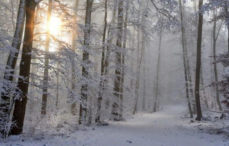 Sneeuw in een bos