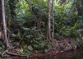 Tijdens Vietnamoorlog gevluchte mannen in jungle gevonden
