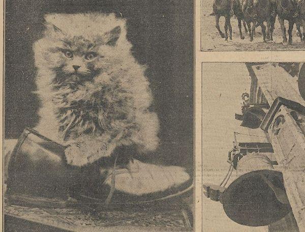 Foto van een kat in het Algemeen Handelsblad, 1931 (KB)