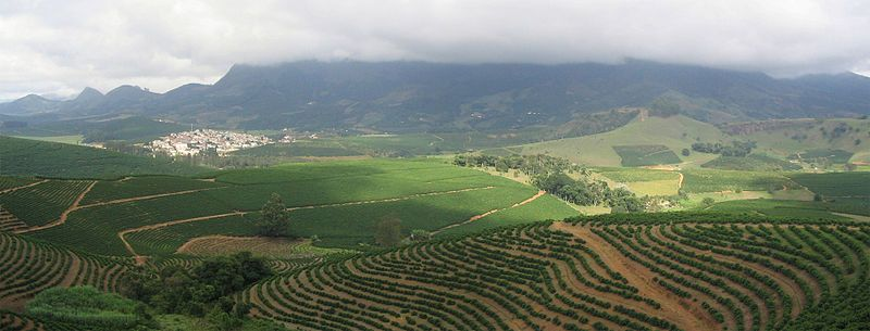 Koffieplantage in Brazilië - Foto: CC
