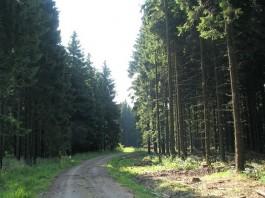 Hürtgenwald - Foto: Wiki / Michael Fiegle