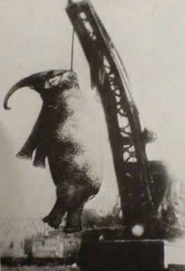 Olifant Mary, opgehangen aan een kraan