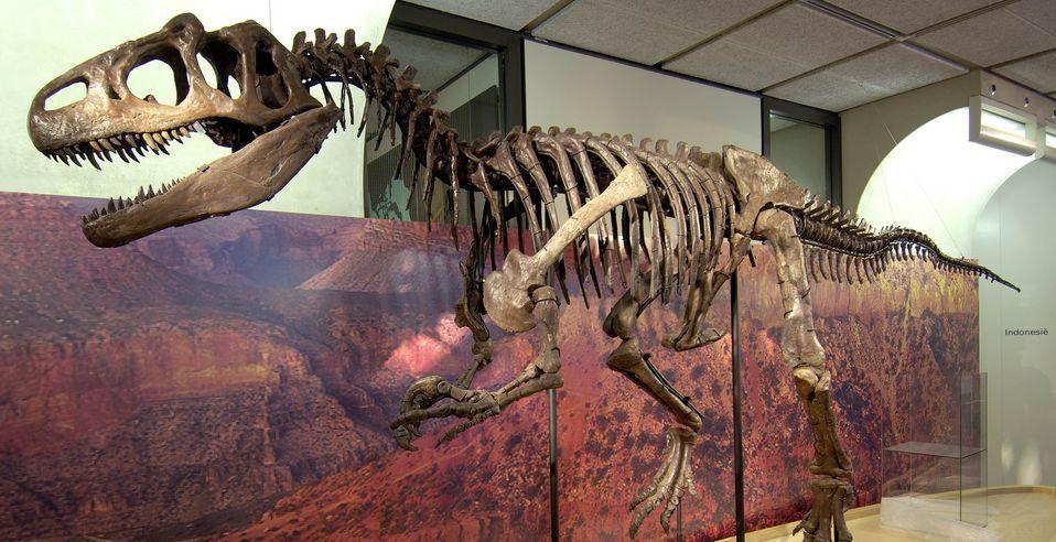 Allosaurus (Museon)