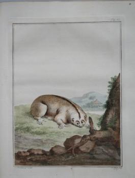 Vosmaer, Aernout. Natuurkundige beschryving eener uitmuntende verzameling van zeldsaame gedierten[…], Amsterdam: s.n., 1804.[MMW 103 E 20]