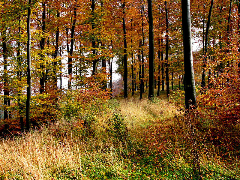 Teutoburgerwald (cc - Nikater)