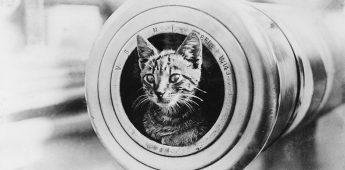 Kattenkwaad & katzwijm – een historische minikatalogus