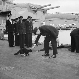 Winston Churchill aait een kat