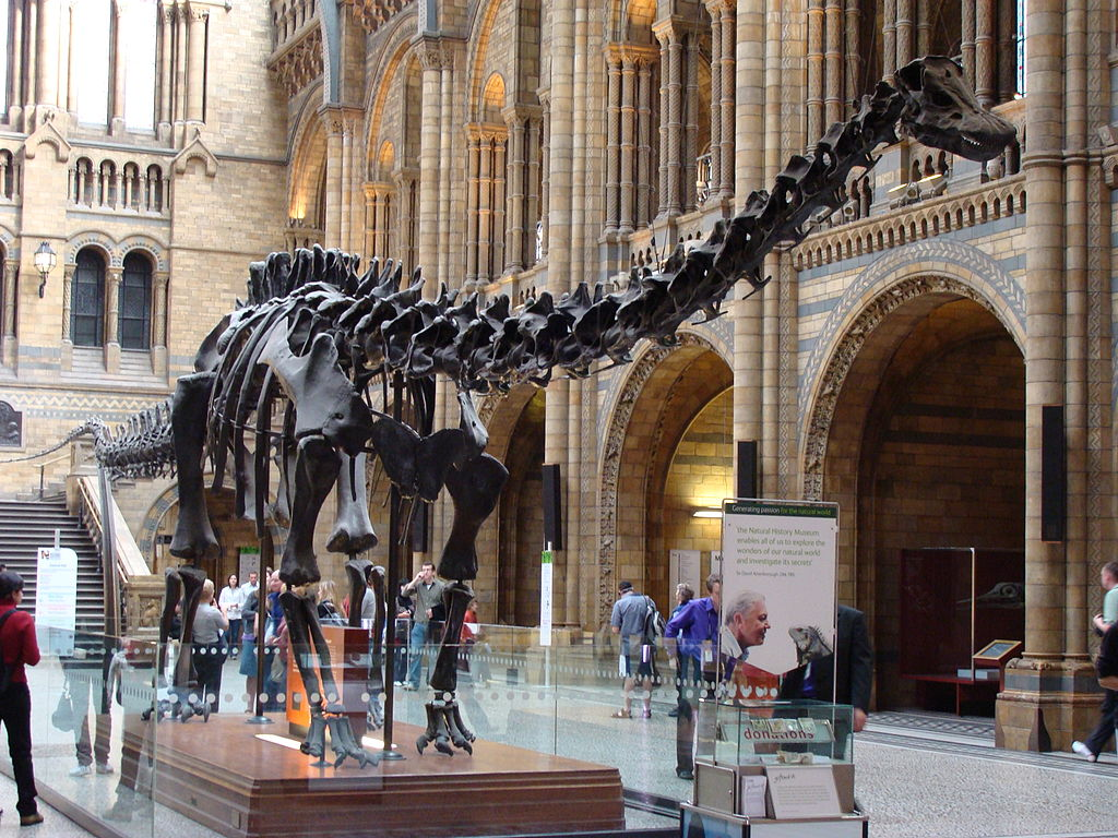 Dippy in het Natural History Museum - cc