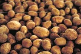 Aardappelen - cc