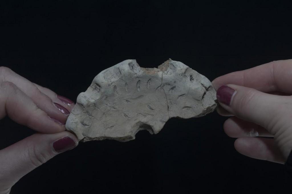 Afbeelding van een van de andere prehistorische schijven (Huis van Hilde)