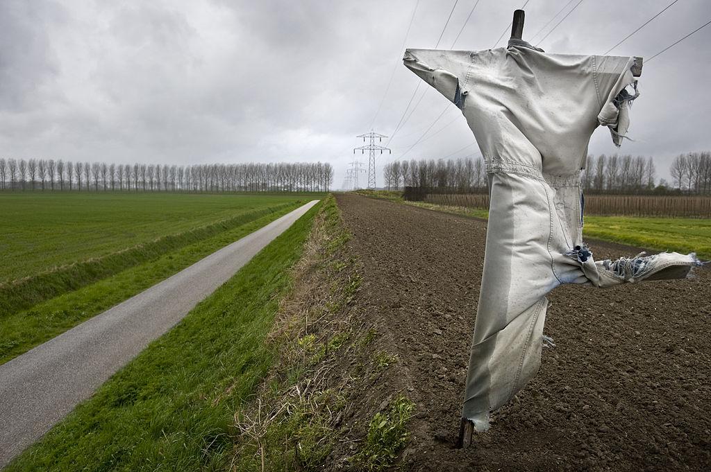 Zeeuws-Vlaanderen, de polder bij Philippine (cc - Michiel Hendryckx)
