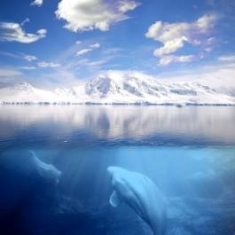 Noordpoolgebied (cc - Leon Mitchell)