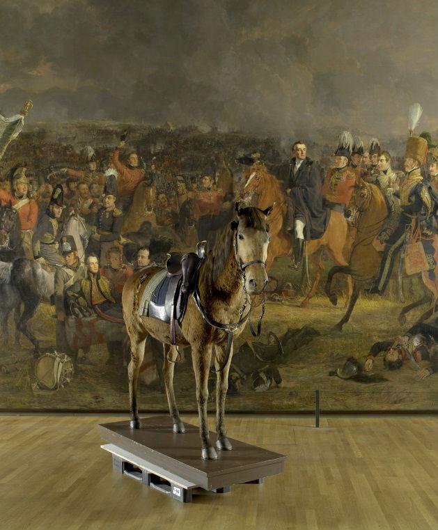 Paard Wexy van koning Willem II voor het schilderij 'De slag bij Waterloo' van Jan Willem Pieneman, Rijksmuseum 2015