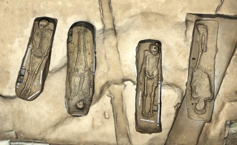 De vier skeletten (Smithsonian)