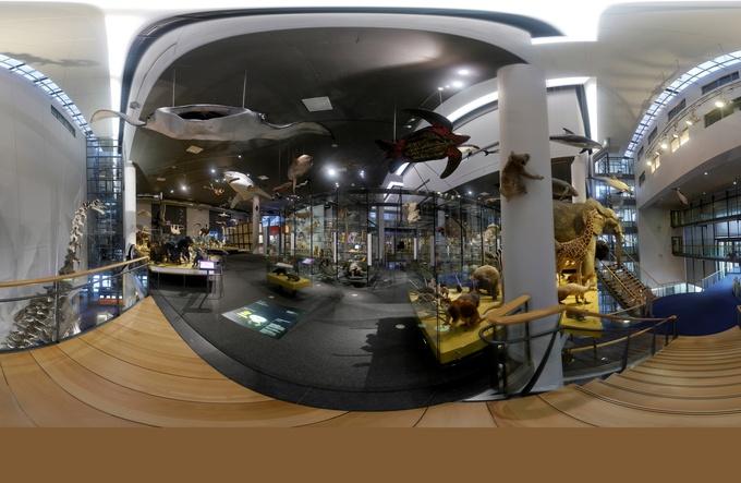 Naturalis te bezoeken via Google Street View