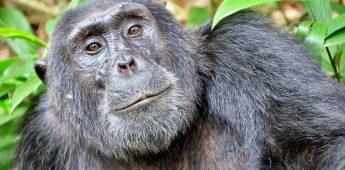 Biologieleraar wilde seks tussen aap en mens