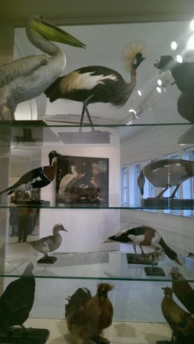 Doorkijkje via opgezette vogels naar een schilderij (ca. 1656) van Albert Jansz. van der Schoor. (Foto: Edith Andriesse)