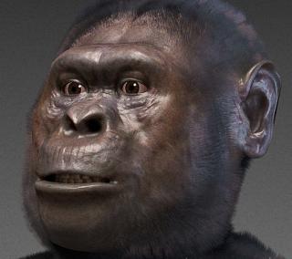 Reconstructie van 'Lucy de Australopithecus' (cc - Cicero Moraes)