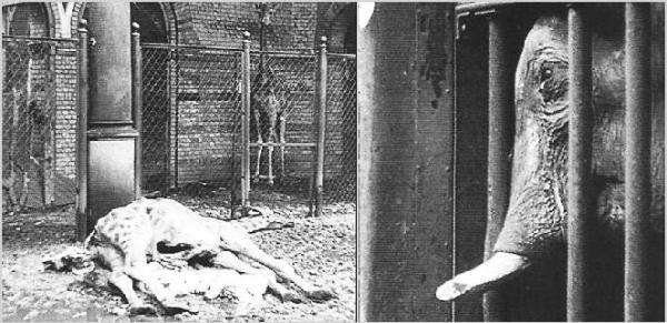 Dode dieren in de Berlijnse zoo (theelephantgate.weebly.com)