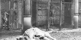 Een dierentuin tussen de puinhopen van nazi-Duitsland