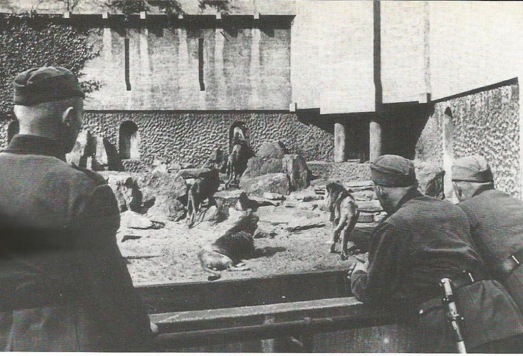 Duitse militairen bewonderen de leeuwen op het Kerbert terras. In de eerste bezettingsjaren verschenen er vaak foto's van Duitse soldaten in Artis in de kranten. Dit paste in het beeld van een vriendelijke bezettingsmacht, dat bewust naar buiten werd gebracht om de Nederlanders gunstig te stemmen. (foto Spaarnestad Photo)