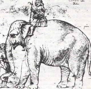 De olifant Hanno, naar een schets van Rafaël omstreeks 1514. Bron: Wikimedia