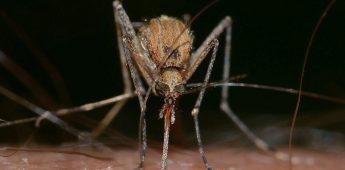 Van een mug een draak maken