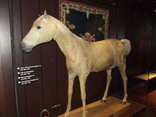 Vizir, het laatste paard van Napoleon - cc