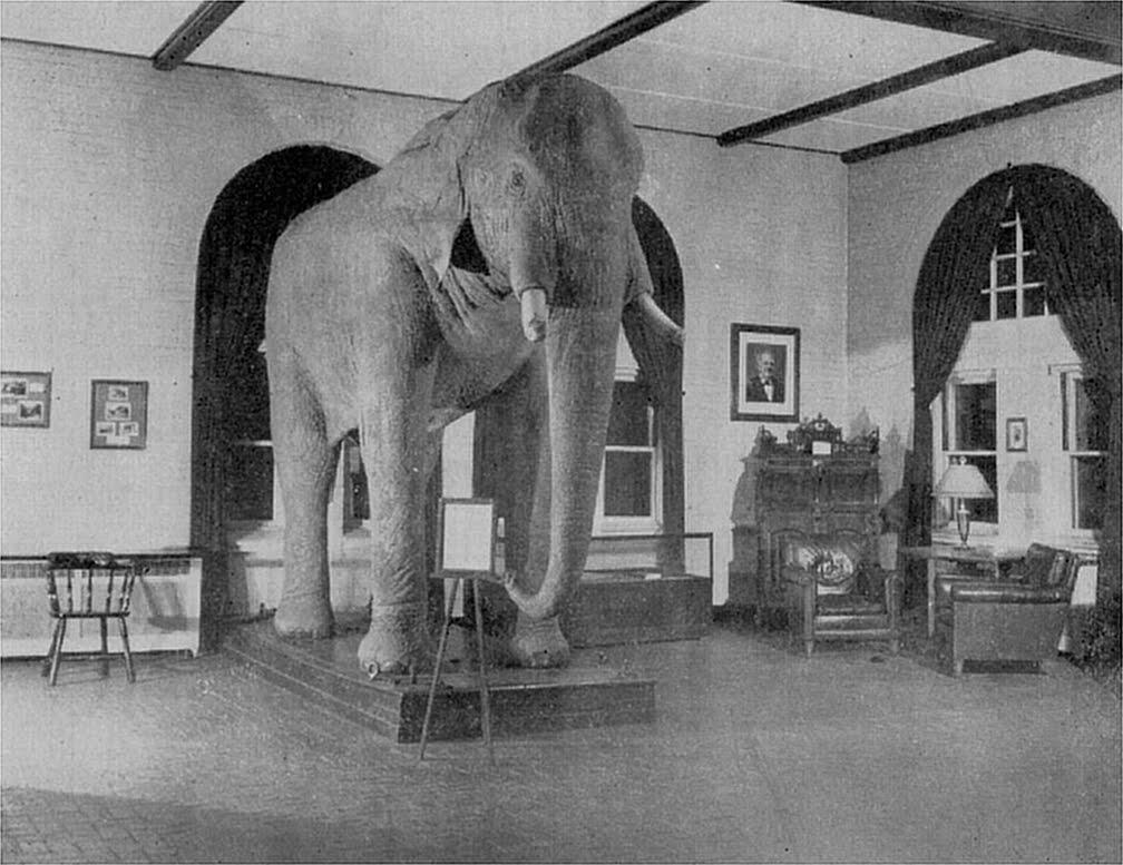 De opgezette Jumbo in Tufts University, ca.1900. Bron: Wikiemedia