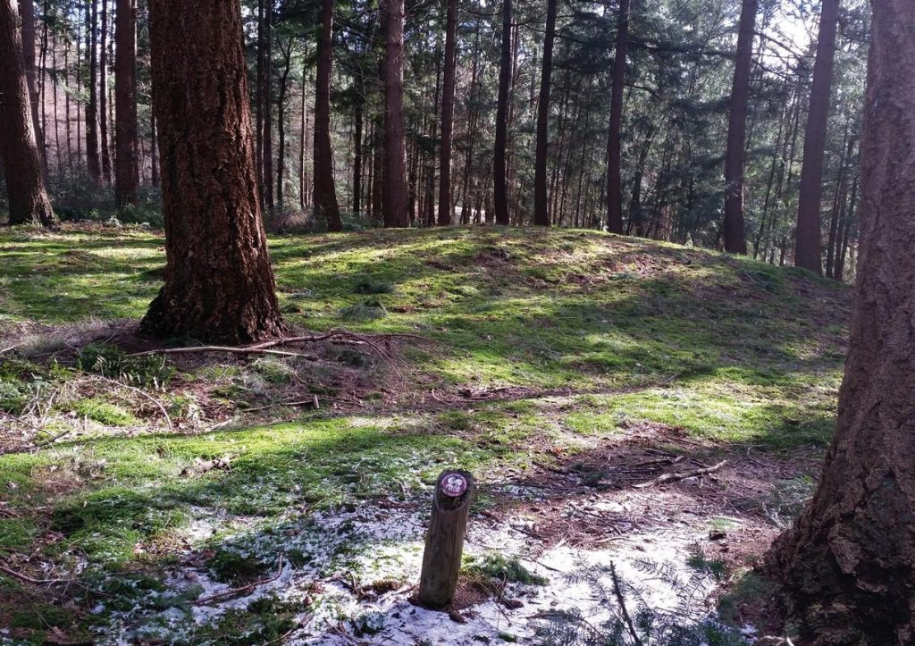 Utrechtse Heuvelrug zet grafheuvels op de kaart