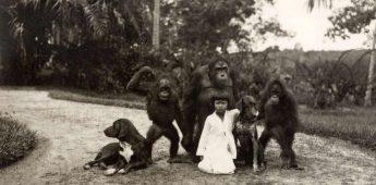 In de aap gelogeerd zijn