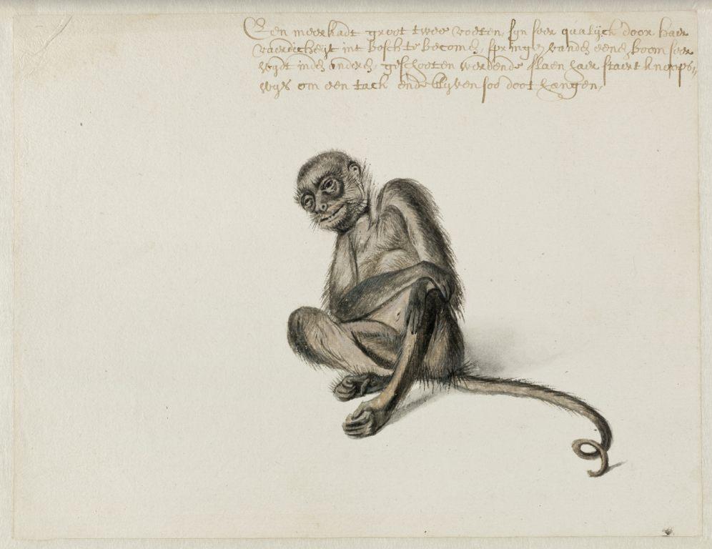 Slingeraap, Frans Post (1612–1680), ca. 1638-1644. Noord-Hollands Archief, Haarlem