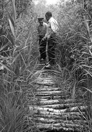 Knuppelpad in het Buurserveen (Twente). Door het veen werden vaak voetpaden aangelegd van stammetjes. In de ondergrond worden soms onvermoede vondsten gedaan.