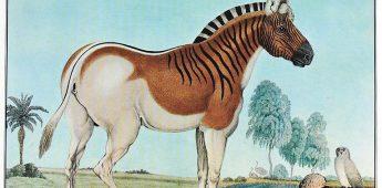 De Quagga en de nutteloosheid van wilde paarden
