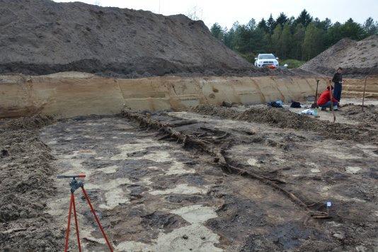 13.000 jaar oud dennenbos ontdekt bij Leusden