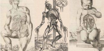 De ontdekking van het menselijk lichaam in de Lage Landen