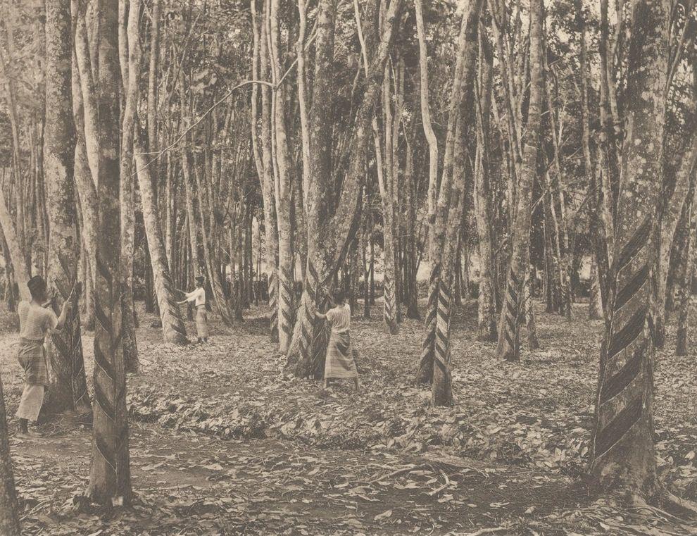 Rubberplantage Sumatra (Tropenmuseum/ kitlv Commons)